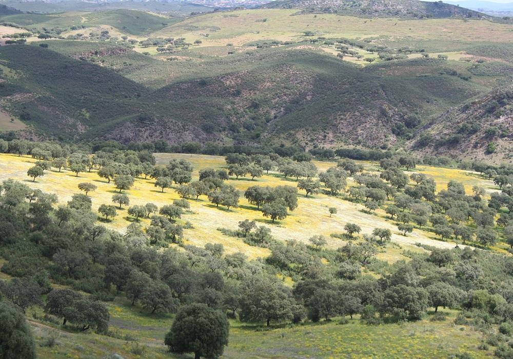 Panoramablick über die Sierra de Aracena in Andalusien, Spanien