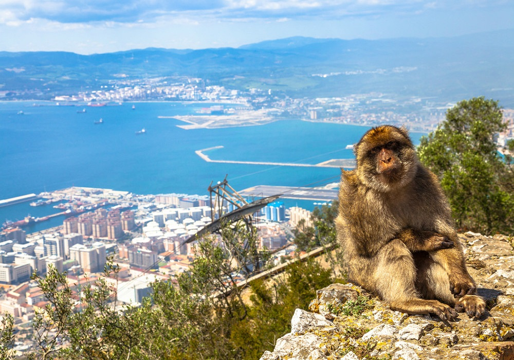 Day trip to Gibraltar. Macacos