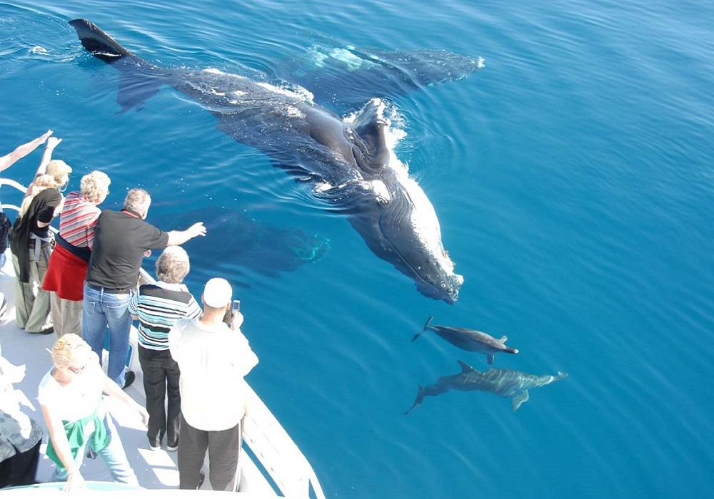 Tagesausflug Walbeobachtung und Sightseeing in Tarifa, schwimmende Delfine und Wale