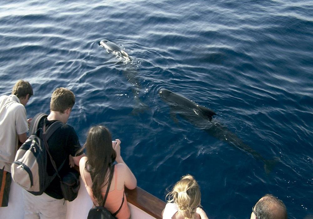 Tagesausflug Walbeobachtung und Sightseeing in Tarifa, schwimmende Delfine