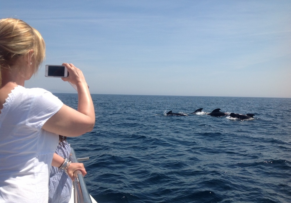Tagesausflug Walbeobachtung und Sightseeing in Tarifa, Wale
