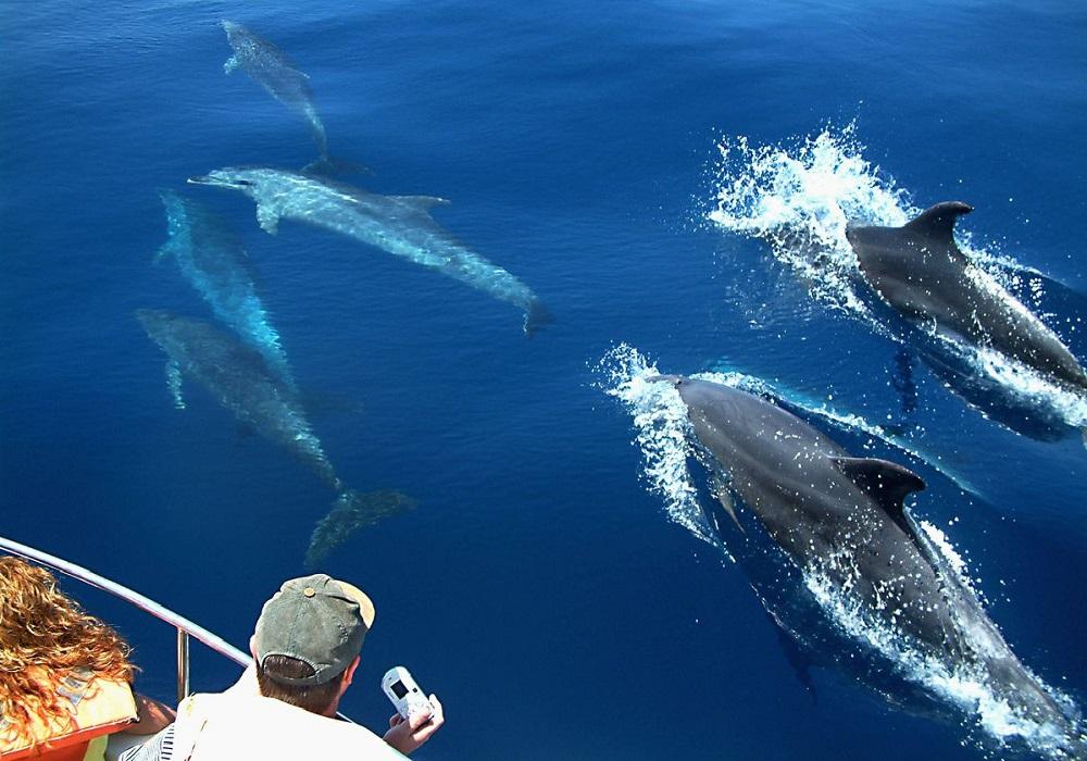 Tagesausflug Walbeobachtung und Sightseeing in Tarifa